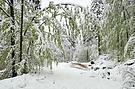 Winterfrühling