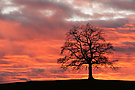 Tag des Baumes (25 April)
