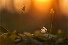 Sonnenuntergangsglühen am Waldboden