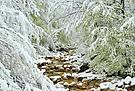 Winterfrühling-2