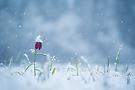 wieder Schnee