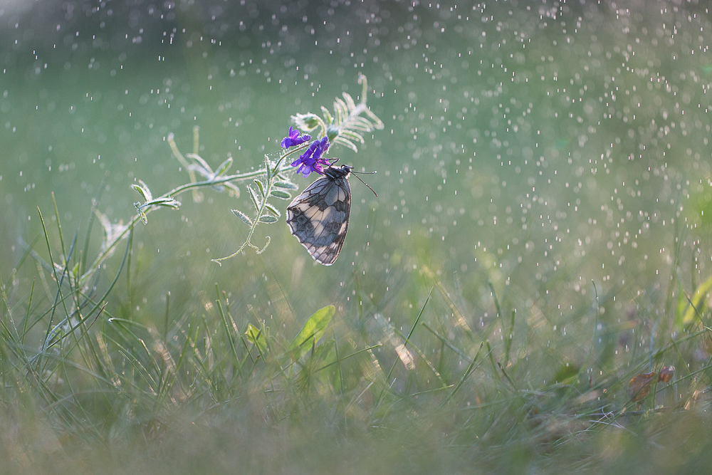 ~ butterfly and rain ~