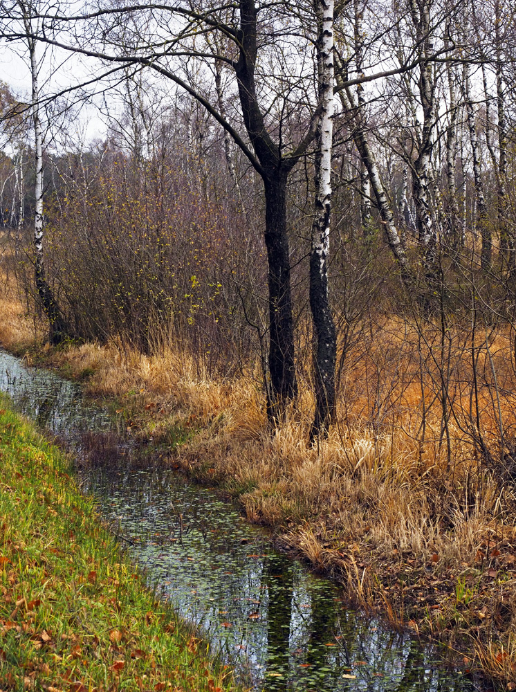 Hohes Venn im November