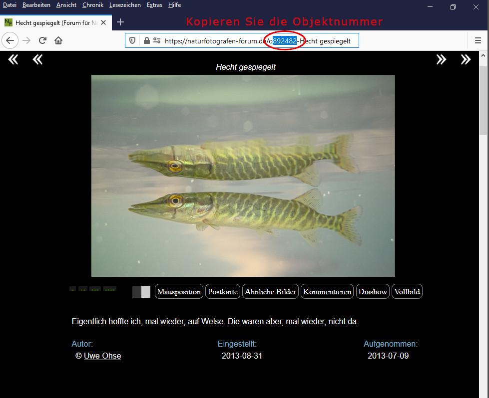 https://naturfotografen-forum.de/data/o/291/1455442/Objektnummer_kopieren.jpg