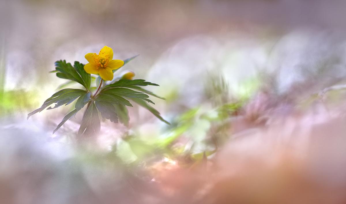 Frühling!..., (Forum für Naturfotografen)