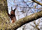 mein erstes Eichhörnchen
