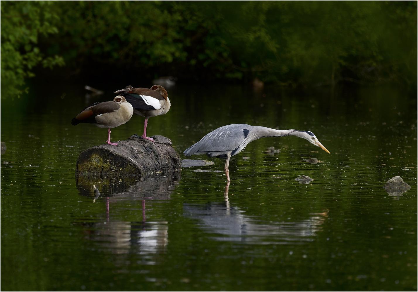 In der Ruhe liegt die Kraft Forum für Naturfotografen