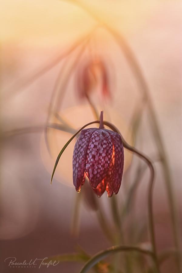 Ich Träume Nur Von Dir Forum Für Naturfotografen