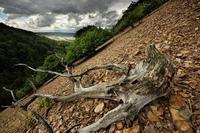 https://naturfotografen-forum.de/data/o/317/1586994/Gunnar_Welleen_--_Anhang_xs.jpg