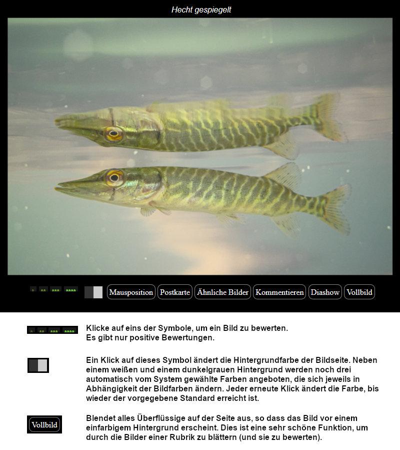 https://naturfotografen-forum.de/data/o/326/1631540/Bilder_bewerten.jpg