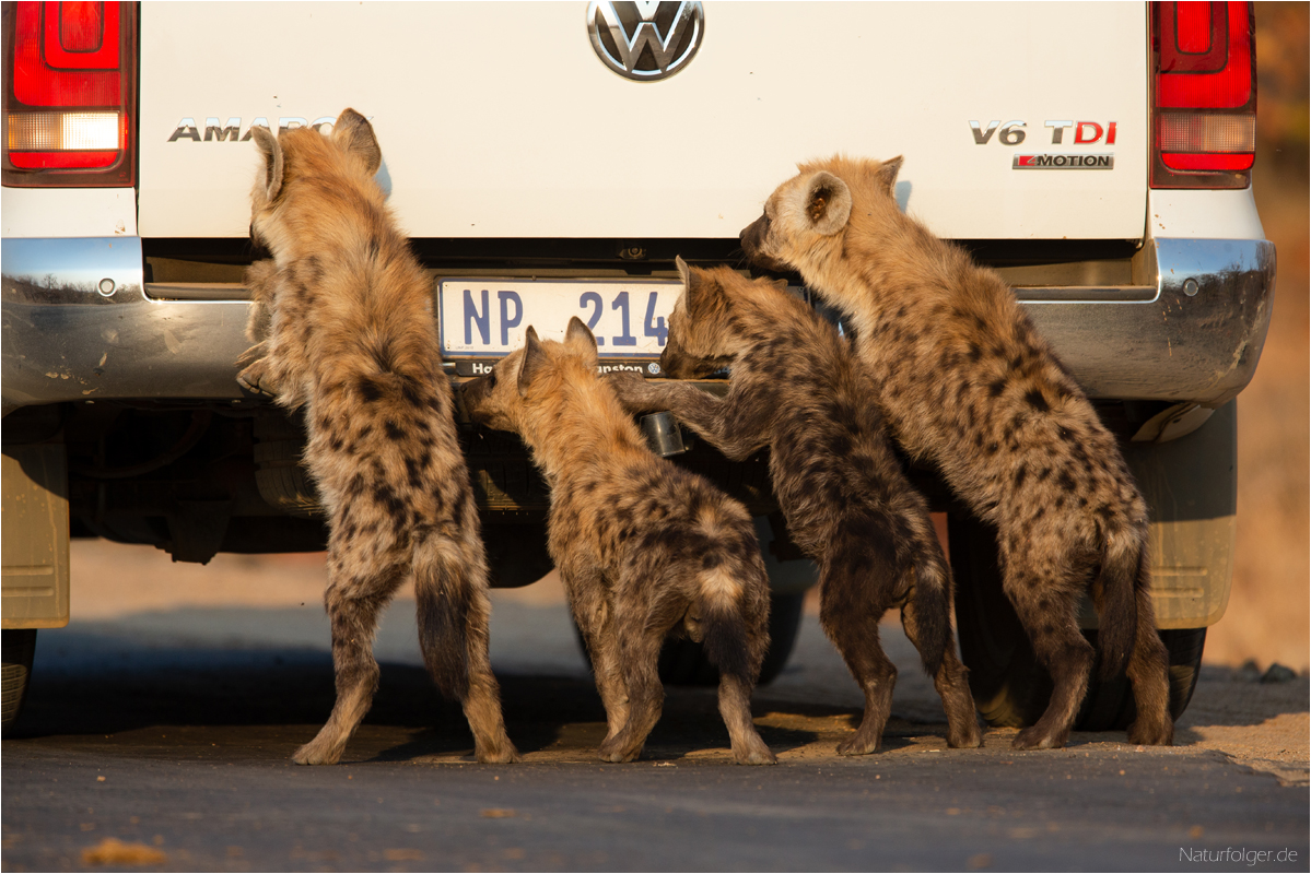 When your car breaks down in Kruger...