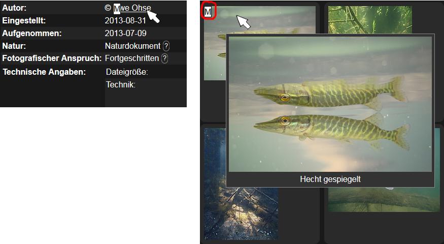 https://naturfotografen-forum.de/data/o/332/1660774/Objekt-Menuezeichen-0.jpg