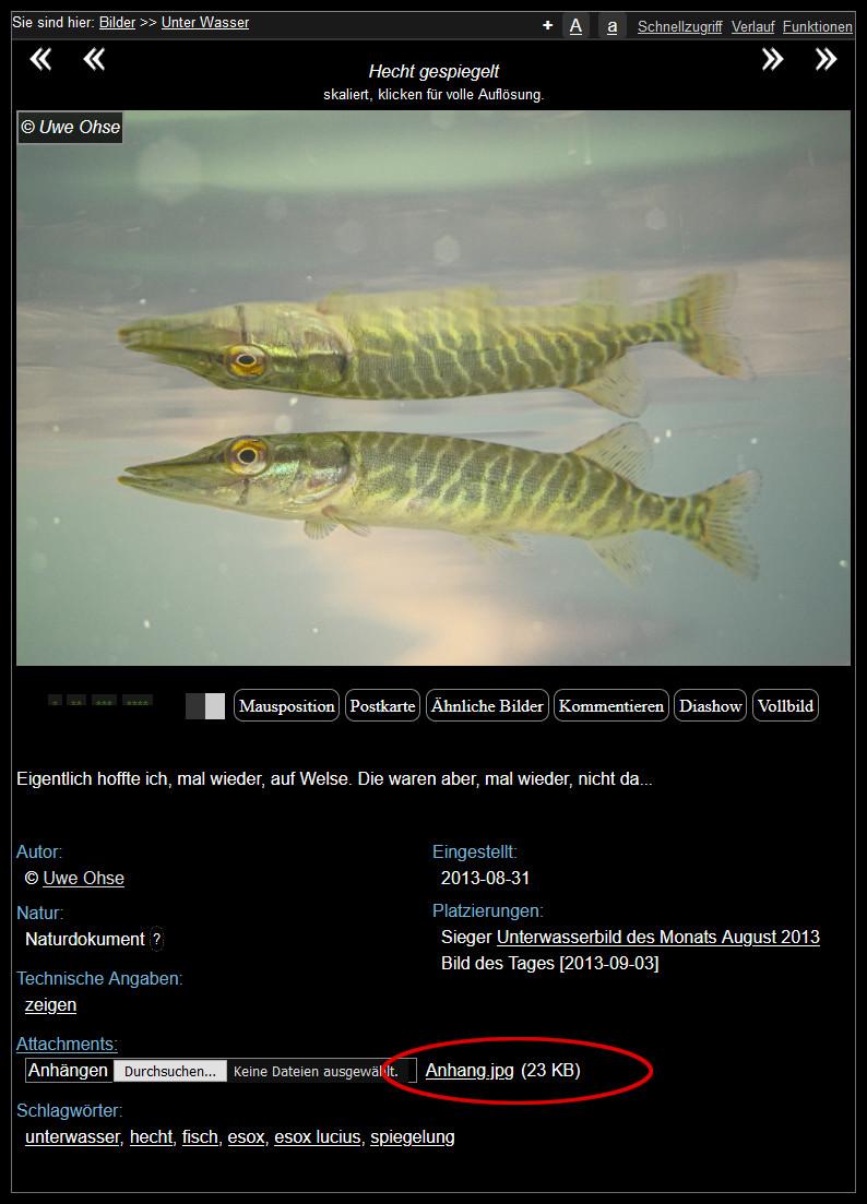 https://naturfotografen-forum.de/data/o/333/1666791/Anhang_--_unter_Ursprungsbild_2.jpg