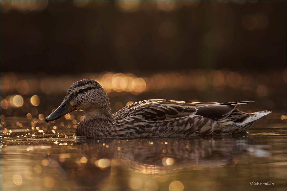 Ente in Gold