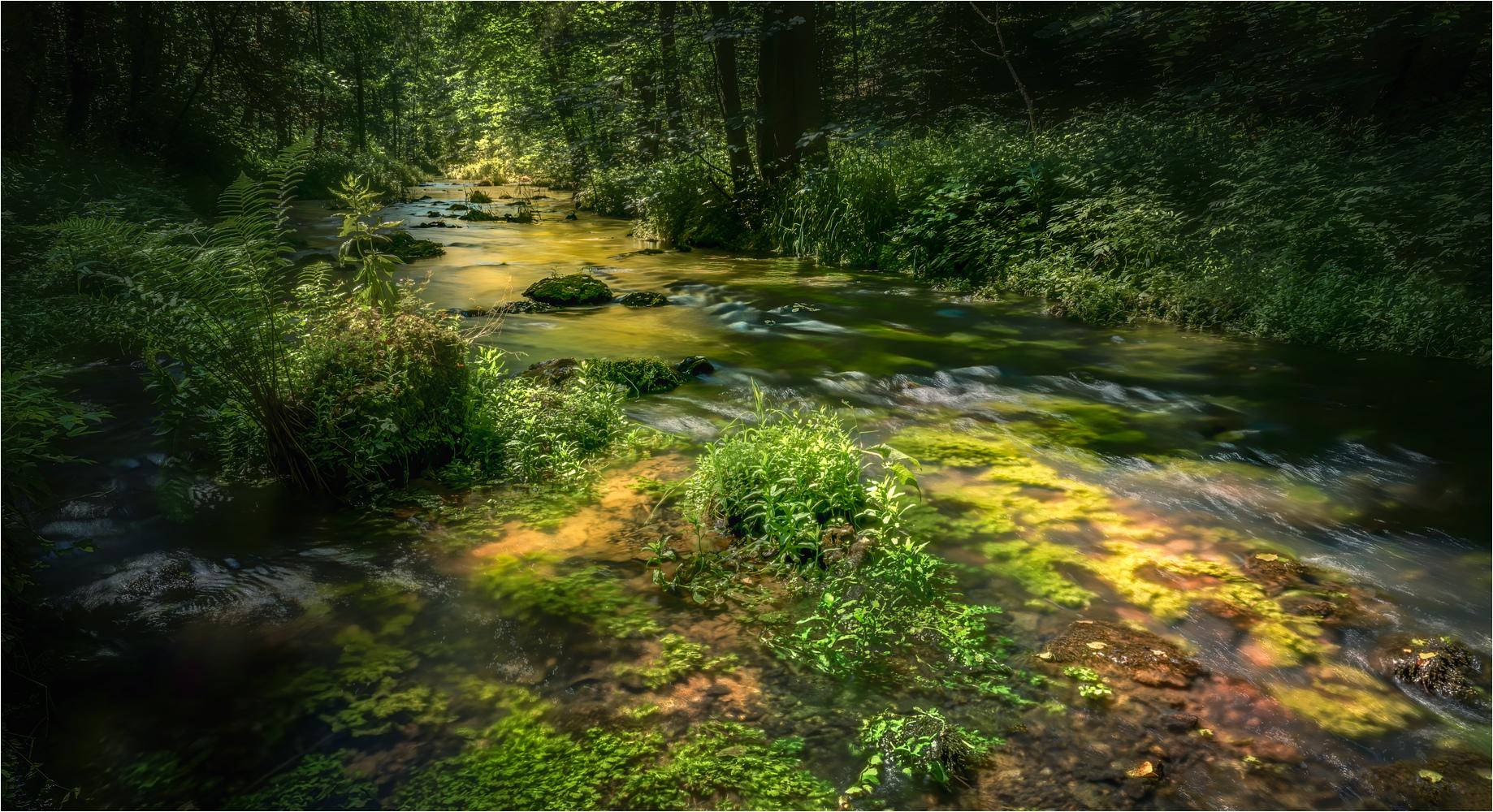 https://naturfotografen-forum.de/data/o/348/1742835/20200624%20Die%20P%C3%BCttlach%20..._ed_1.JPG