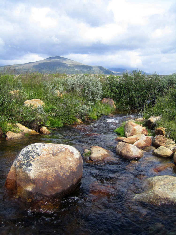~clean water in Dovrefjell~
