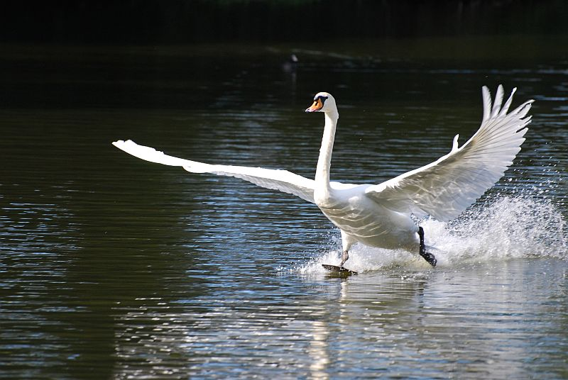 ao prostituierte fliegender schwan
