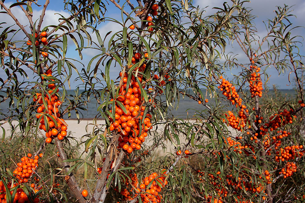 Exotische Früchte  ESSEN UND TRINKEN