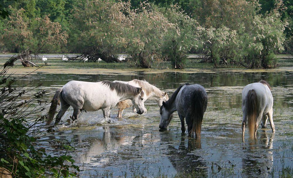 Forum Pferde