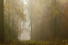 ...geheimnisvoller Nebelwald...