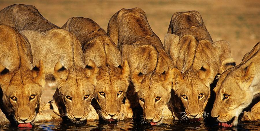 Löwenforum