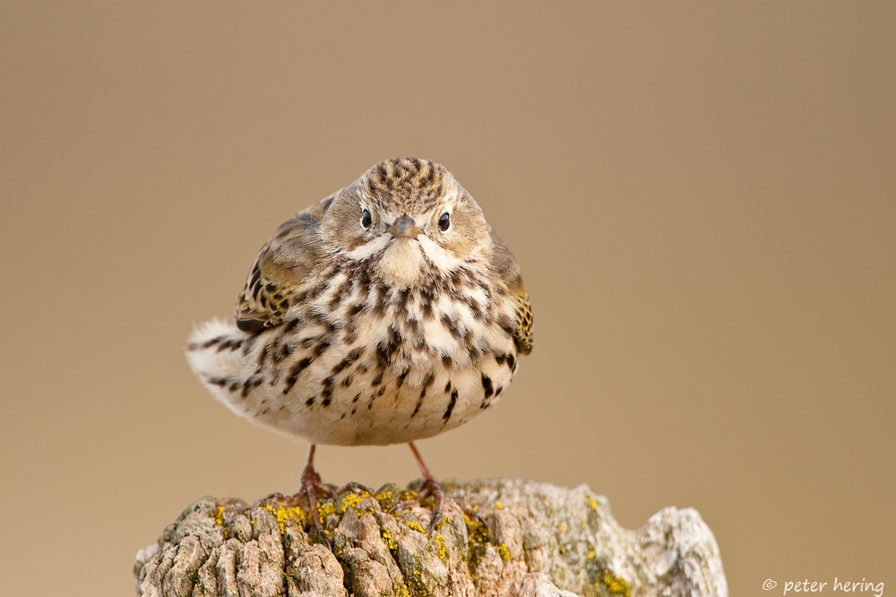 Nordseevögel (Forum für Naturfotografen)