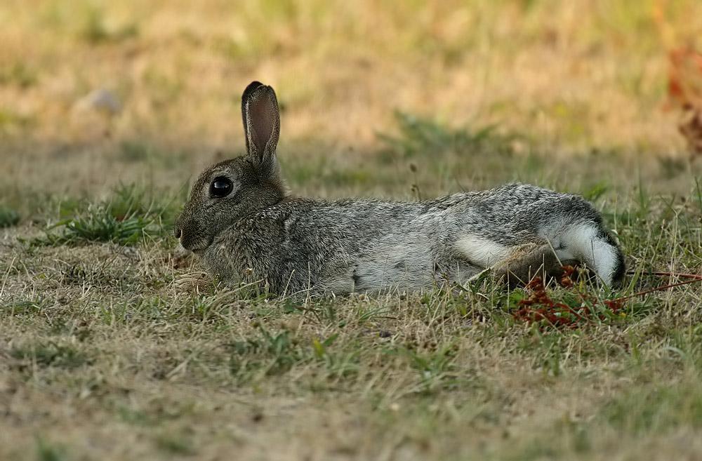 Kaninchen Forum