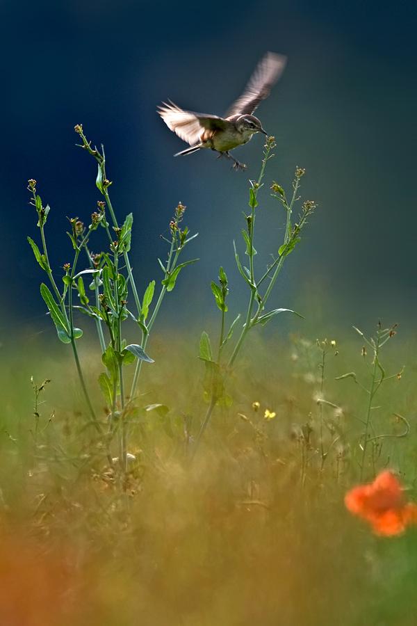 Insektenjagd über Der Blumenwiese Forum Für Naturfotografen