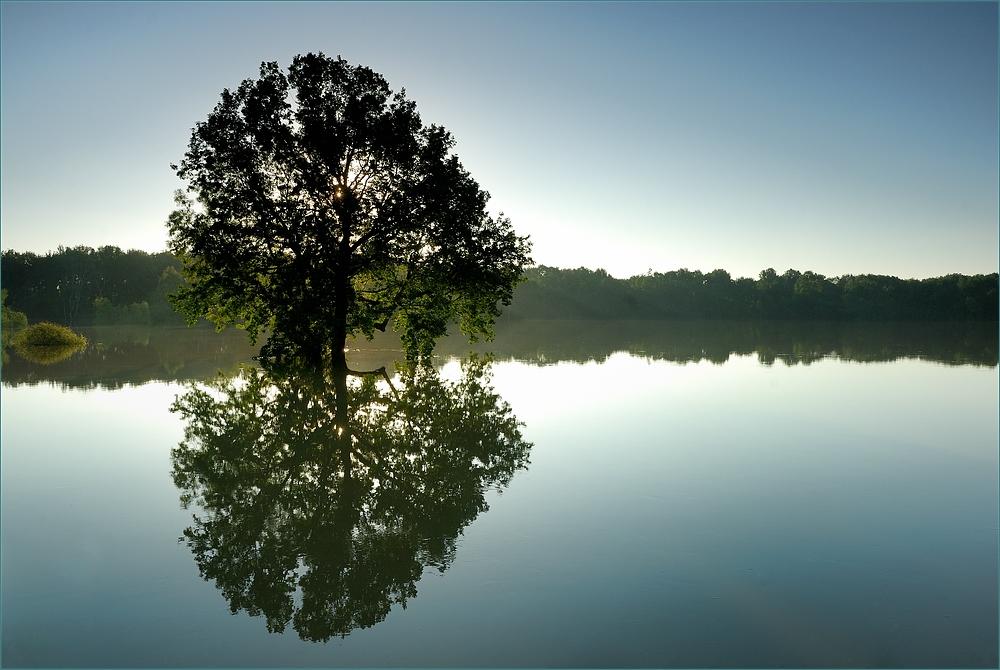 Baum Am Wasser