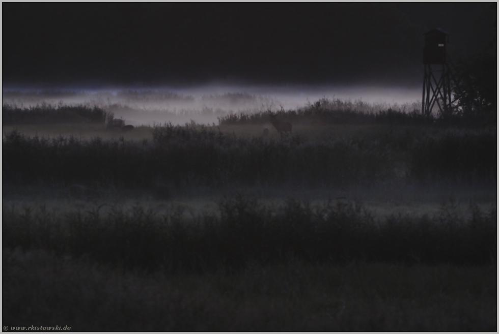 Dunkelheit... Hirschbrunft *Darßwald* (Forum für ...
