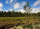 Waldmoor - Hamra NP