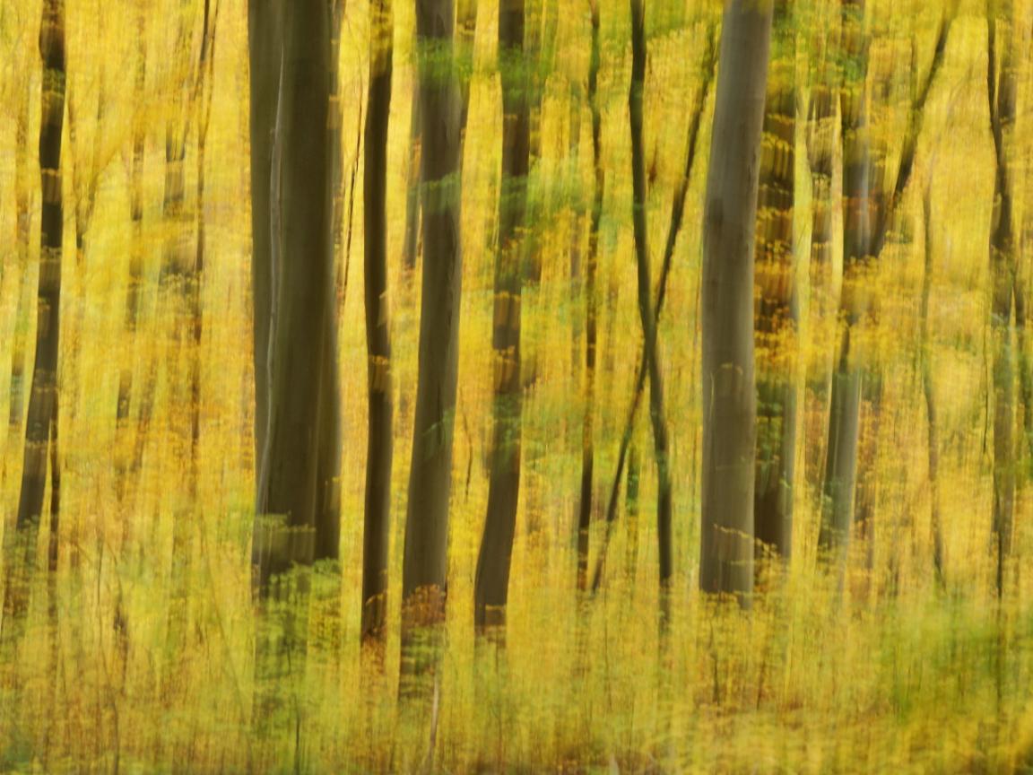 https://naturfotografen-forum.de/data/upload/1532057/Herbstwald-b.jpg